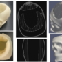 X-ray images of printed skull.